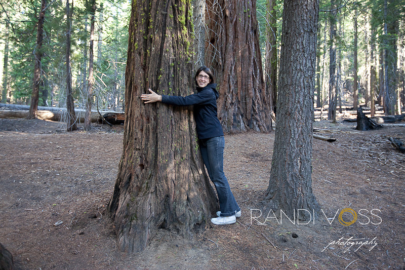 Yosemite National Park Mariposa Grove Giant Sequoia Trees